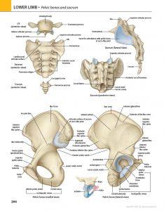 کتاب آناتومی گری مبحث اندام جلد دوم