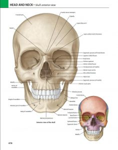 کتاب آناتومی گری مبحث سر و گردن جلد سوم